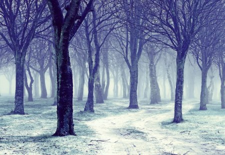Snow Forest - Winter, Forest, Nature, Snow