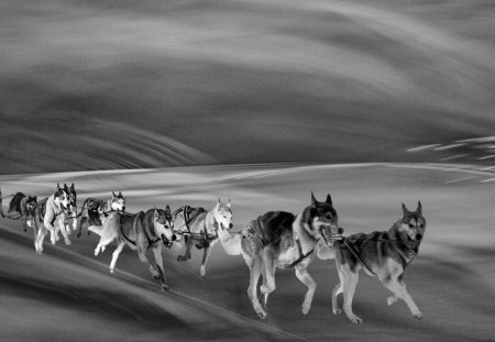 Trail - animals, fun, black, digital, dogs, trail, photography, wp, bw, tour, white, nature