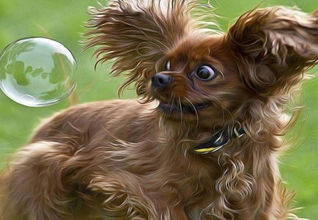 What The? - cute, dogs, animals, bubble