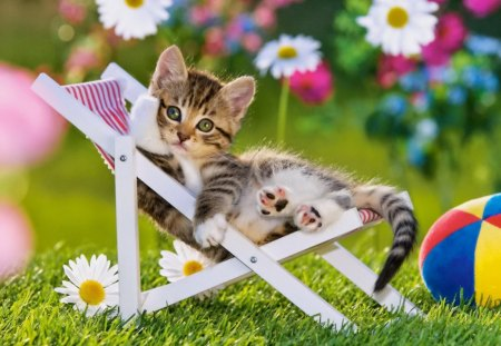 The resting kitty - flowers, garden, spring, adorable, sunbed, relax, photo, grass, greenery, green, daisies, summer, fluffy, rest, yard, cute, ball, kitten, cat, kitty, sweet
