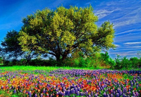 Field of flowers - flowers, spring, summer, meadow, beautiful, colorful, field, sky, pretty, lovely, tree, nice, nature