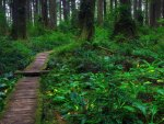 Beautiful Forest Path