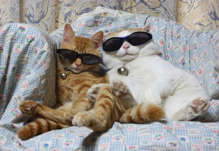 COOL CATS - Cats & Animals Background Wallpapers on ...