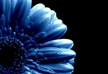 Blue Daisy - Flowers & Nature Background Wallpapers on ...