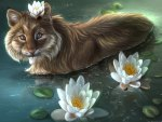 ✼.Lovely Cat and Lotus.✼
