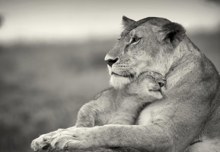 True love - lion, lioness, cute, mother, adorable, love, cub