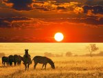zebras in the serangeti at wondrous sunset
