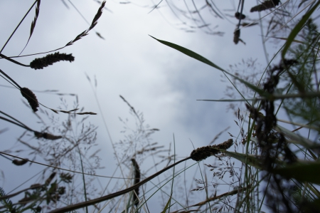 Insect's eye view - meadow, grass, perspective, green, lawn