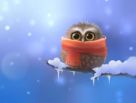 COLD BABY OWL