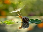 SNAIL WITH SUN UMBRILLA