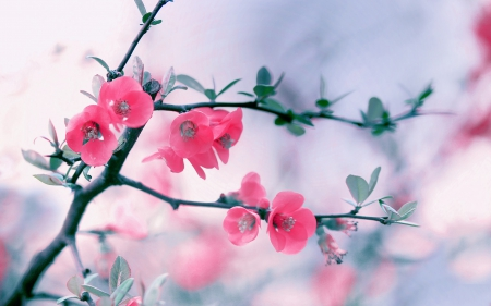 pretty flowers  flowers  nature background wallpapers on desktop, Beautiful flower