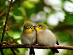 LOVE ON A BRANCH