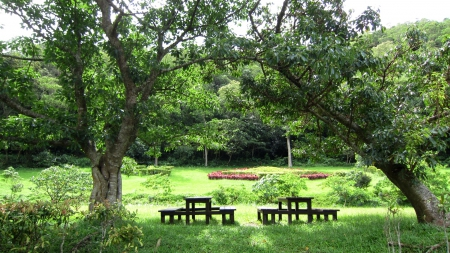Lush green - grass, take a rest, Lush green, tables and chairs, tree