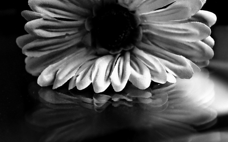 Reflection In Black White