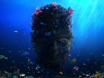Coral Reef Head & Fish