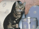 Tabby cat sitting a heart shape box