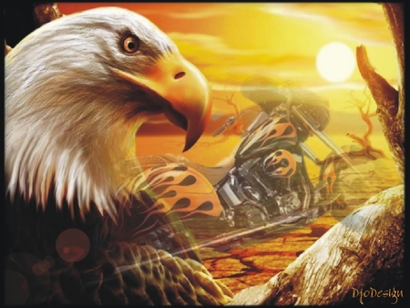 harley-davidson eagle country - harley-davidson country, logo-eagle