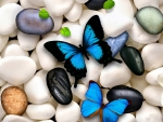 Butterflies on stones