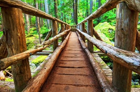 Boardwalk in forest - summer, beautiful, trees, river, lovely, boardwalk, walk, nice, bridge, wooden, forest, nature