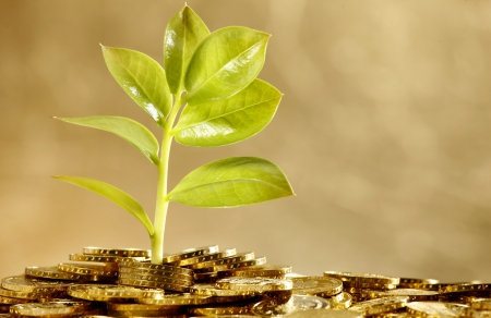 Money Tree - Photography & Abstract Background Wallpapers ...