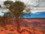 gnarled tree in a red canyon