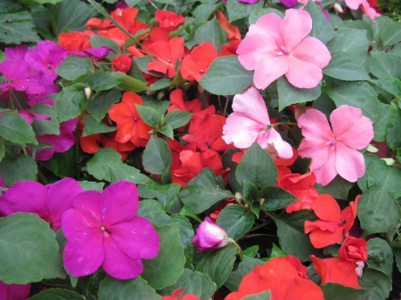 Flowers garden in greenhouse 96 - red, pink, photography, Flowers, green, garden, purple