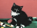 Black and white kitten on a pool table