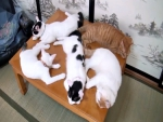 Kitties on table