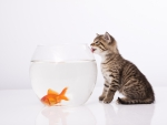 Cat Hunt Fish