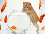 Kitten in aquarium... Hmm...Fish in aquarium...