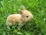 Baby Rabbit on the Nature