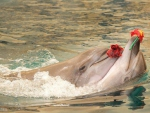 ♥ Dolphins in Love ♥