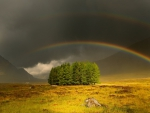 rainbow over an island of trees in a meadow