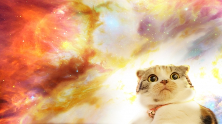 The kitten from space cats animals background - Space kitty wallpaper ...
