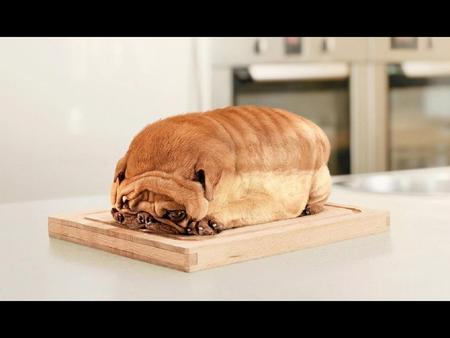 I'm Not a Bread - dog, funny, bread, pug