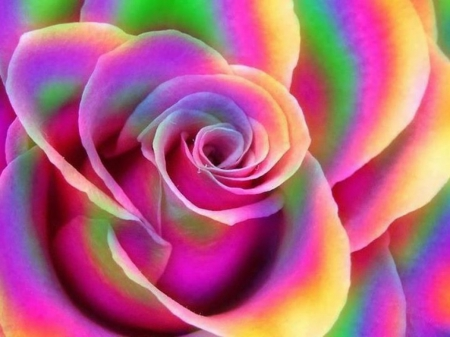 Rainbow rose - 3D and CG & Abstract Background Wallpapers ...
