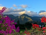 View from Na Pali coast north shore Kauai - bougainvillea flowers