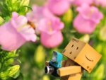 Danbo The Photographer