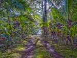 Tropical Dense and Lush Rainforest Driveway on Big Island Hawaii