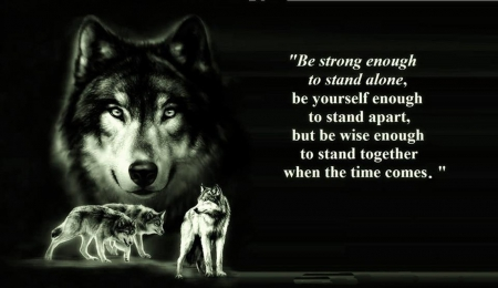 wolf wisdom - friendship, mythical, abstract, pack, howl, howling, lobo, grey wolf, quotes, dog, wisdom beautiful, wallpaper, wolves, timber, canine, winter, wolf, lone wolf, wolfrunning, wild animal black, wolf wallpaper, majestic, wolf pack, the pack, snow, white, solitude, grey, black, arctic, canis lupus, nature, spirit