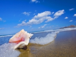 Conch Shell on Beach Hawaii