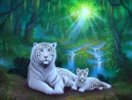 ..Family of White Tigers..