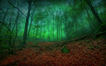 Buy Green misty forest pictures trends