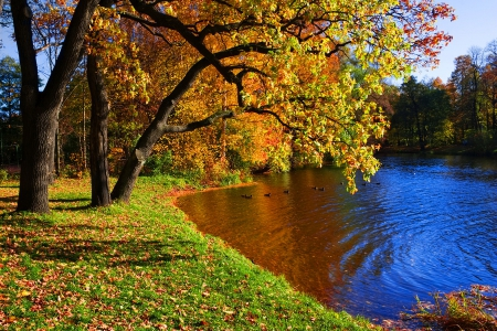 Autumn Lake Lakes Nature Background Wallpapers On Desktop