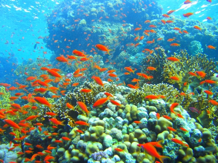 Incredible Coral Reef and Fish - Nature, Coral Reefs, Fish, Oceans, Marine Life, Underwater