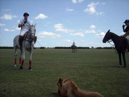 Polo horses standing around - polo, horses, sky, field