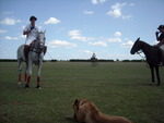 Polo horses standing around