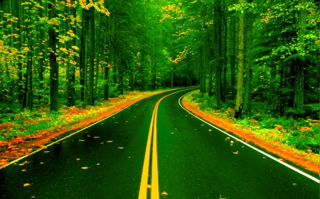 FOREST ROAD - Forests & Nature Background Wallpapers on Desktop ...