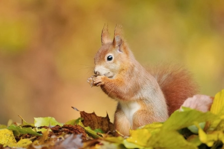 cute squirrel in a fall leaves squirrels amp animals