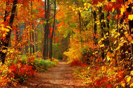 Colorful Autumn Trees To Paint